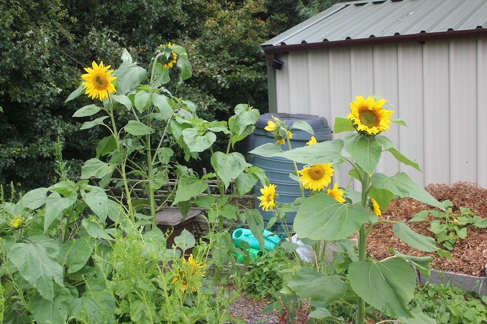 What a Bloomin' Garden!